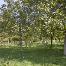 commune-neuhaeusel-34