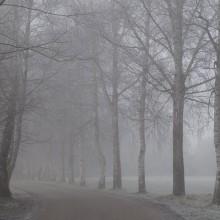 Forêt à Neuhaeusel